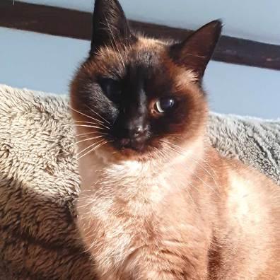 Serenity-animal-visite-a-domicile-chat