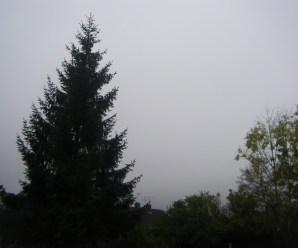 Foto Friday : Morning Sky & Dandelions