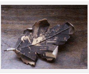 My find of the week : Fragile Photo Leaves