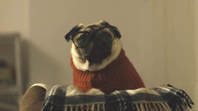 Vision Direct - A Pug's Christmas - cute adorable Gizmo - dog with glasses