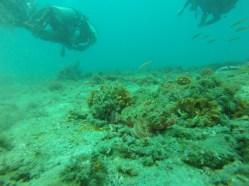 Buceo 6