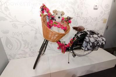 Dog-on-Bike
