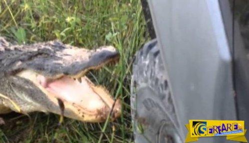 Όταν ο αλιγάτορας τα έβαλε με το φορτηγάκι, ποιος κέρδισε λέτε;