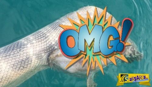Ψαράς αποτυπώνει επική μάχη μεταξύ δηλητηριώδους φιδιού και του πιο δηλητηριώδους ψαριού στον κόσμο!