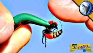 Αυτό το έντομο μπορεί να σκοτώσει μια αγελάδα – Ήθελε να τον τσιμπήσει για να δει τι θα πάθει …