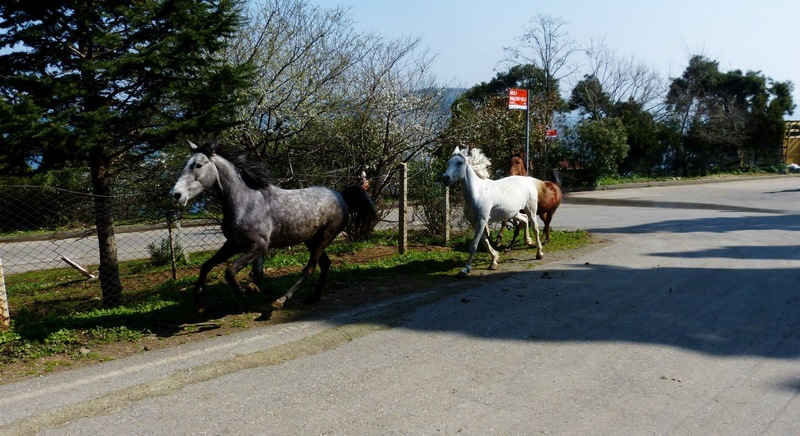 serial-travelers-turquie-istanbul-ile aux princes-buyukada-2 (Copier)