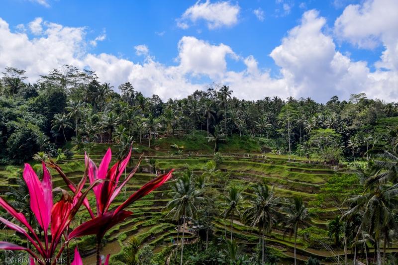 5 jours dans les alentours d'Ubud