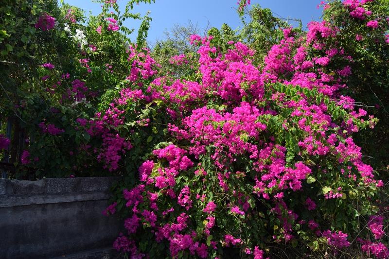 serial-travelers-fleurs-bali (4)