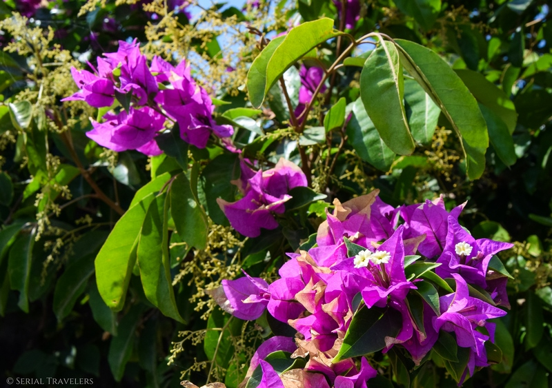 serial-travelers-fleurs-bali