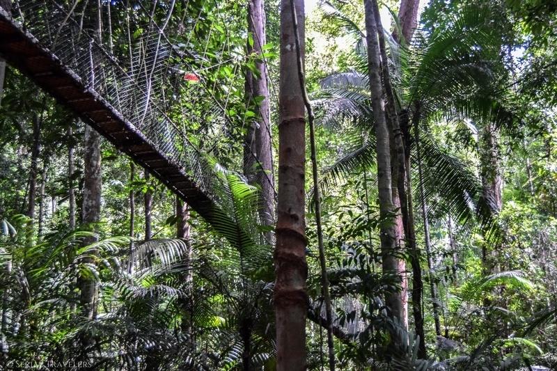 serial-travelers-malaisie-taman-negara-canopy-walk