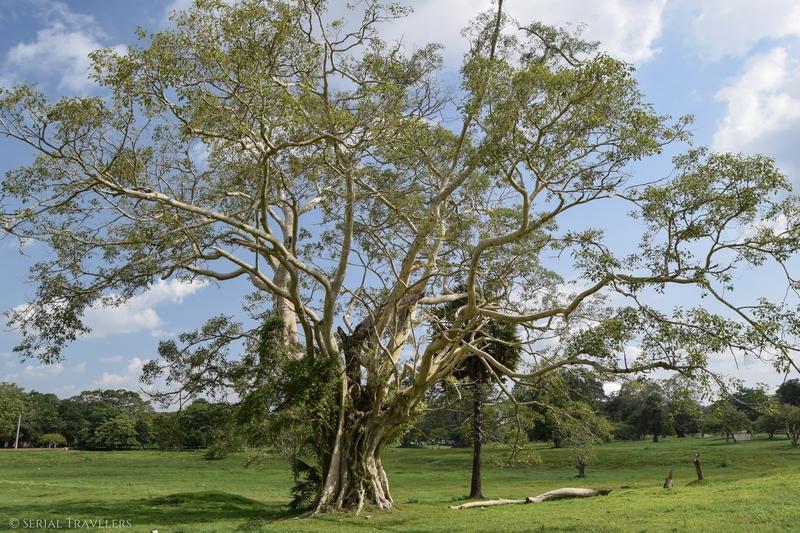 serial-travelers-sri-lanka-anuradhapura-sacred-city-tree-park