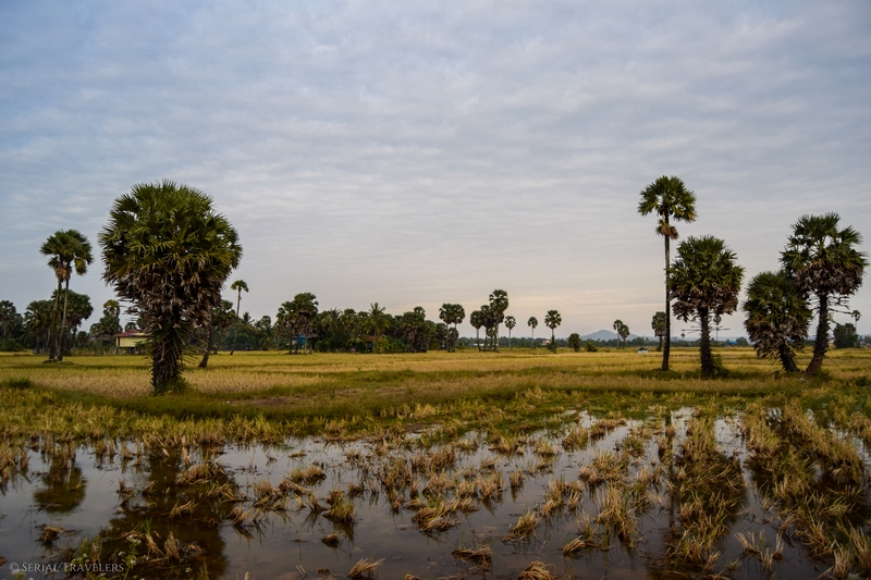 serial-travelers-cambodge-kampot-campagne13