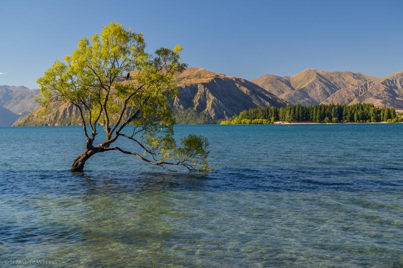 serial-travelers-nouvelle-zelande-that-wanaka-tree-lookout4