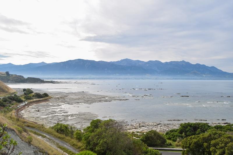 serial-travelers-nouvelle-zelande-kaikoura-20
