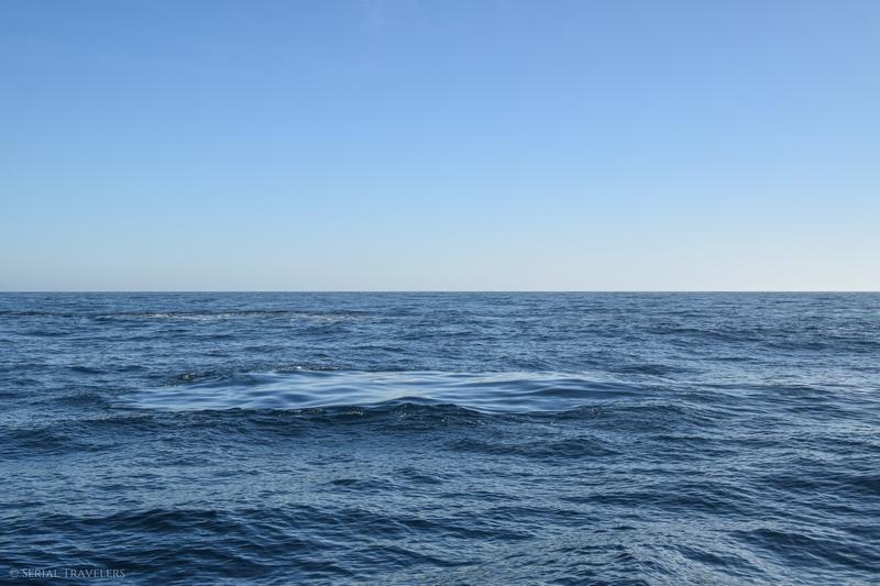serial-travelers-nouvelle-zelande-kaikoura-whalewatch-trace-baleine