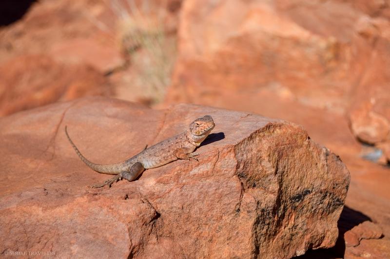 serial-travelers-australie-kings-canyon-rim-walk-agame-barbu3