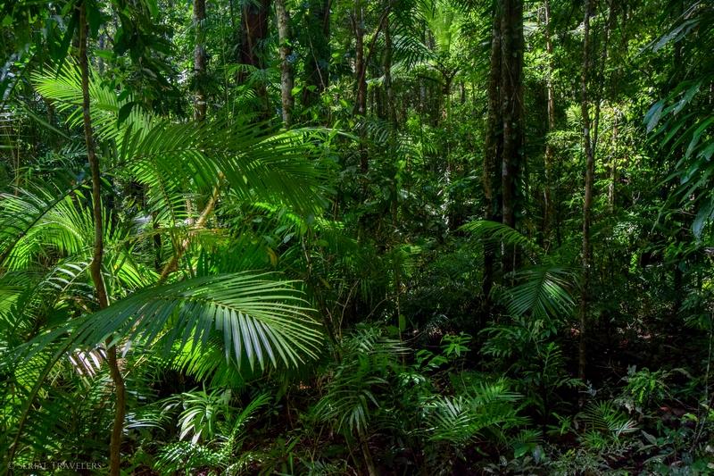 serial-travelers-australie-daintree-forest-jindalba-board-walk2