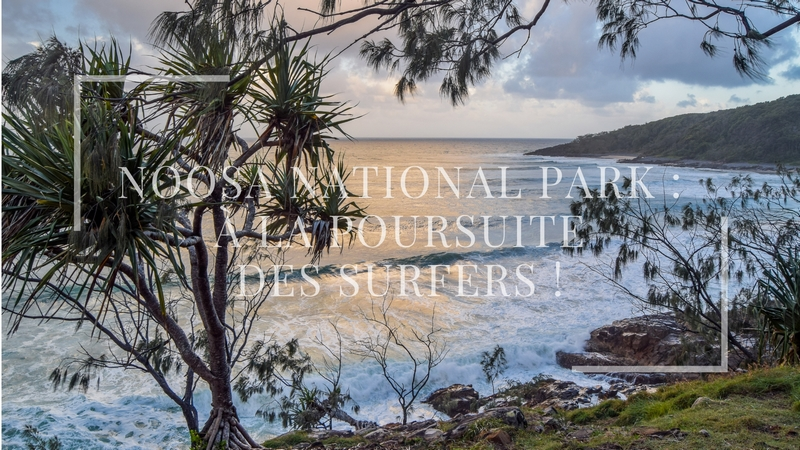 Noosa National Park : à la poursuite des surfers !