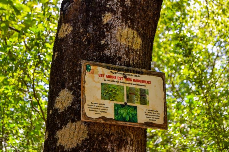 serial-travelers-martinique-randonnee-presquile-caravelle-mangrove12
