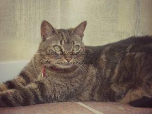 Gato y toxoplasmosis durante el embarazo