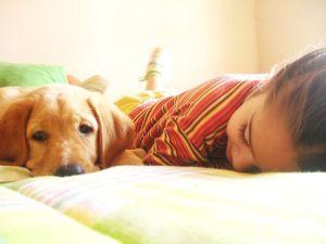 Niños y perros. ¿Cómo actuar?