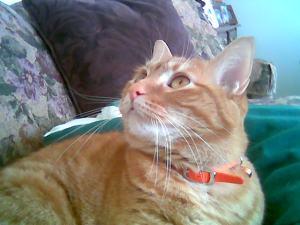 Izzie, the cat