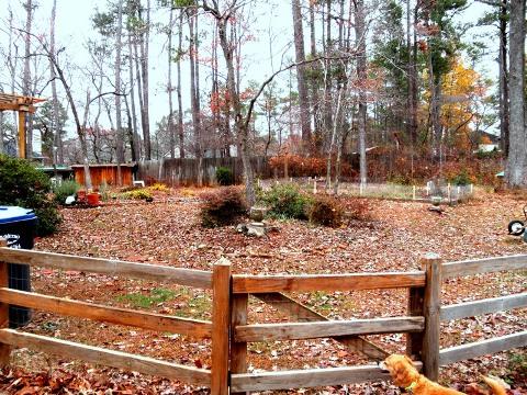 our backyard under fallen leaves