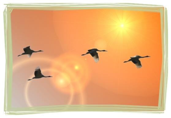 2012년 임진년 새해 복 많이 받으세요!