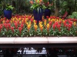 Fucua Orchid Center