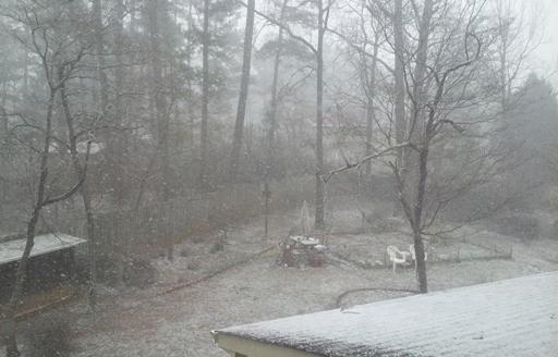 Backyard 시야를 가리는 태고의 눈발..눈발..