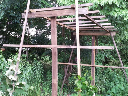 grape vine arbor structure up!