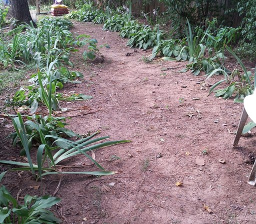 dried up, Yonsook Trail