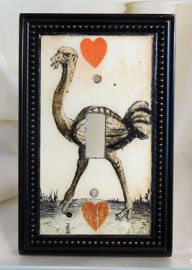 ostrich-close-up