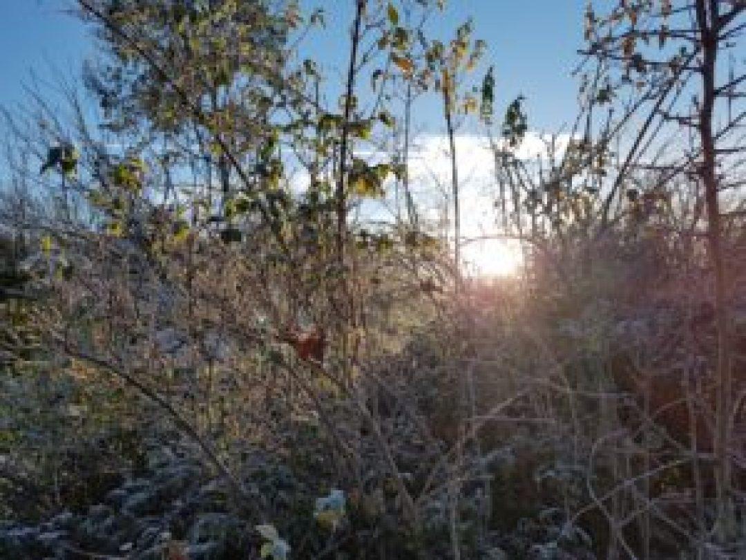 Soleil matinal à travers la haie