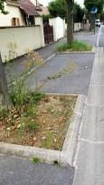Rue de Magny, quelques herbes folles?