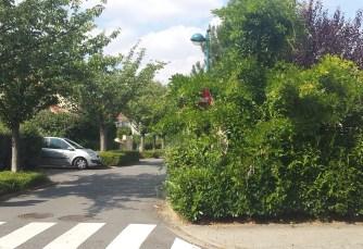 Rue du Clos de l'Etang, panneau peu visible? Quid de la sécurité ! Aussitôt publiée, aussitôt la taille a été effectuée!