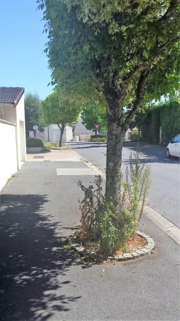 Rue de l'Eglise, quelques herbes folles?