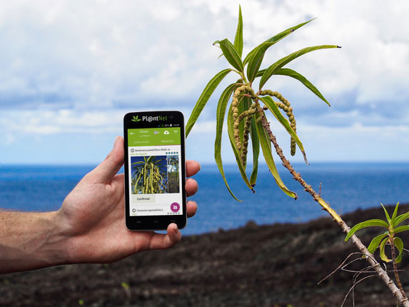 PlantNet For Plants Will Identify Plant From A Photos