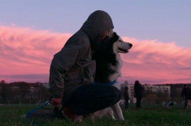 Netflix'ten Yeni Bir Belgesel Dogs Geliyor