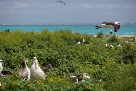 Islas Midway