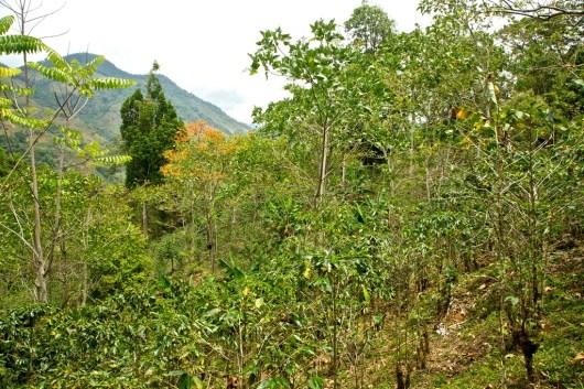 Parque Nacional Chirripo 1