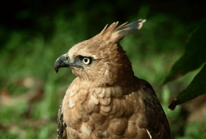 Sejarah Burung Garuda Sebagai Lambang Negara Seruni Id