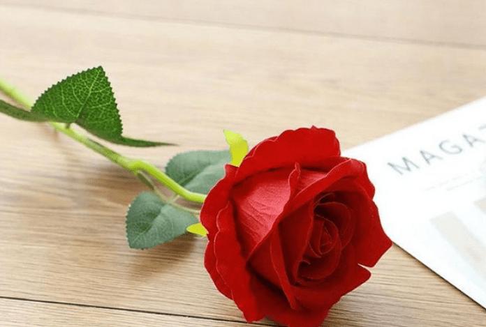 Sejarah Dan Filosofi Di Balik Indahnya Bunga Mawar Merah Seruni Id