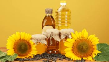Ragam Manfaat Bunga Matahari Dan Cara Merawatnya Seruni Id