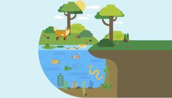 Interaksi-Makhluk-Hidup-dengan-Lingkungan-(Ekosistem)