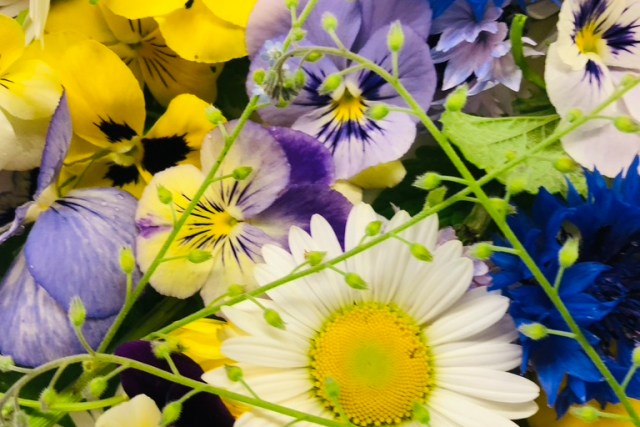 Botanika - Edible flowers, Herbs, Cut flowers, Flower confetti