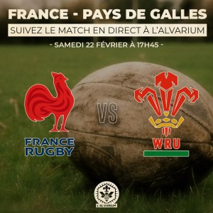 France contre pays de Galle