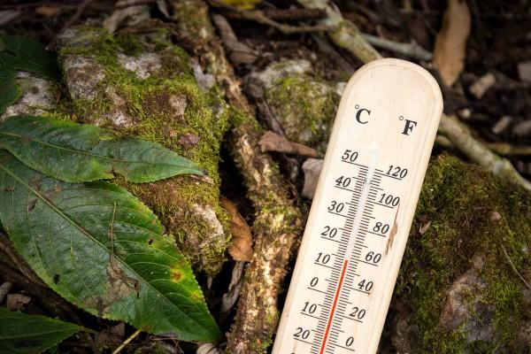 gambar termometer