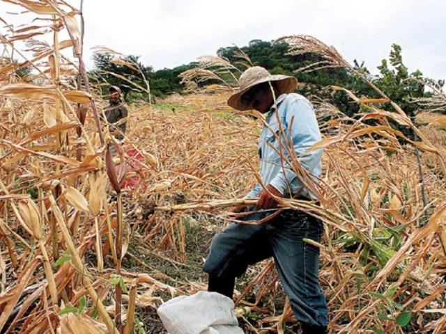 La tierra podría ser cada vez más complicada de cultivar, lo que generaría mayor migración. Fotografía: El Heraldo
