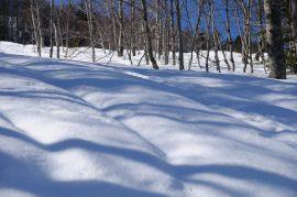 El domingo las sombras de las hayas se dibujaban onduladas entre las hayas bajo el cielo azul.